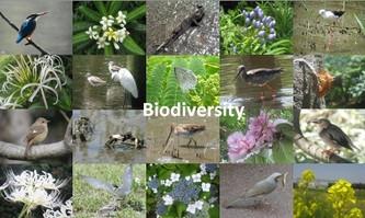 Biodiversity2011_s